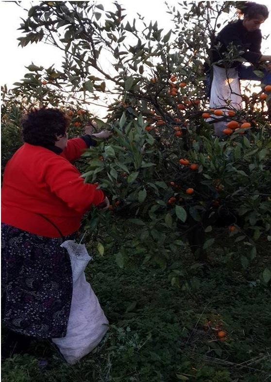 Ламара и Асида собирают урожай.